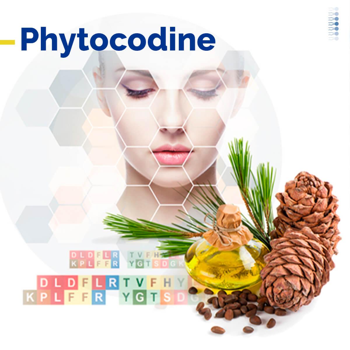 Lipoid Kosmetik lança novo ativo botânico: PhytoCodine<sup>®</sup>